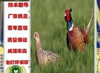 新闻:惠州惠东鸭苗批发联系地址!包头资讯